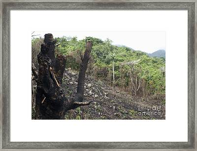 Forest Cleared For Firewood Framed Print