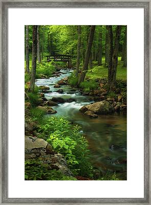 Forest Clearing Framed Print