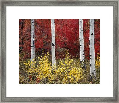 Forest Color Framed Print