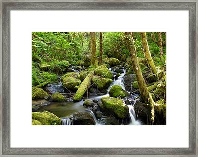 Forest Creek Framed Print