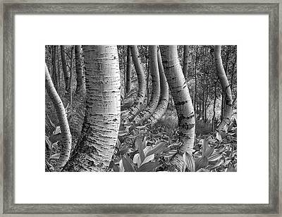 Forest Curves Framed Print