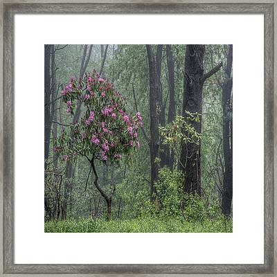 Forest Dancer Framed Print by David Stone