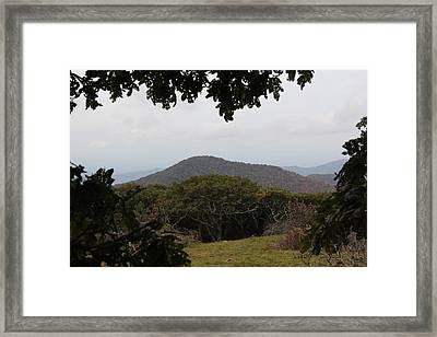 Forest Dark Space Framed Print