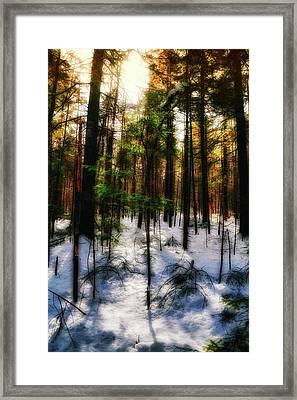 Forest Dawn Framed Print