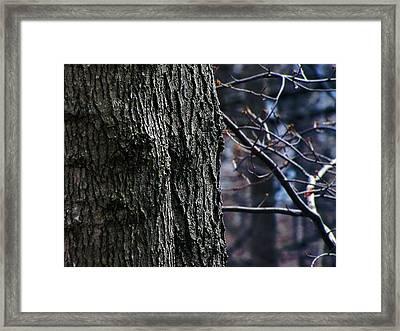 Forest Decor Framed Print by Scott Hovind
