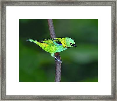Forest Edge Framed Print by Tony Beck
