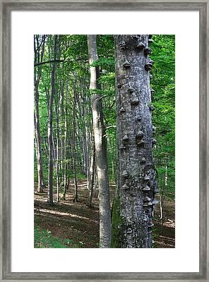 Forest Framed Print by Elisa Locci