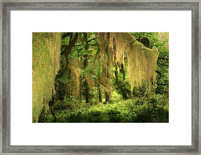 Forest Fantasy - Quinault - Gateway To Paradise On The Olympic Peninsula Wa Framed Print by Christine Till