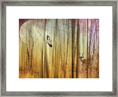 Forest Fantasy  Framed Print by Jessica Jenney