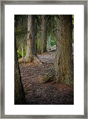 Forest Feet Framed Print by Jon Woodbury