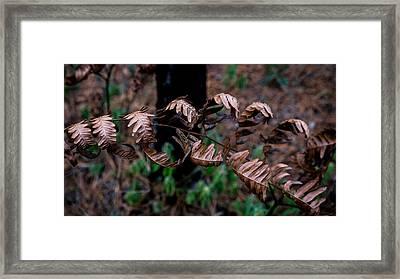 Forest Ferns Framed Print by Glenn DiPaola