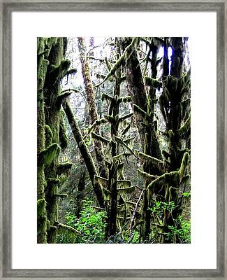 Forest Finery Framed Print by Will Borden