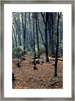 Fir Forest-1 Framed Print by Henryk Gorecki