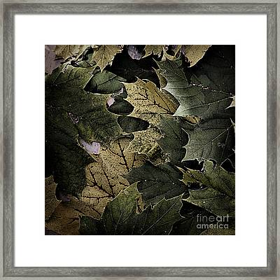 Forest Floor - Leaf 12 Framed Print by Pete Hellmann