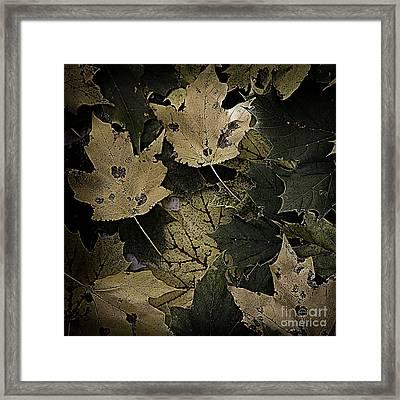 Forest Floor - Leaf 13 Framed Print by Pete Hellmann