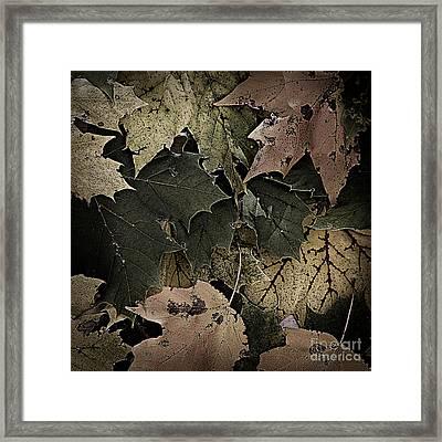 Forest Floor - Leaf 14 Framed Print by Pete Hellmann