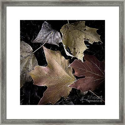 Forest Floor - Leaf 2 Framed Print by Pete Hellmann