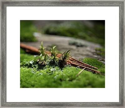 Forest Floor 2 Framed Print