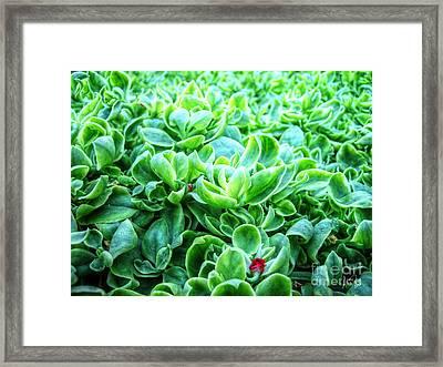 Forest Floor Framed Print by Alina Davis