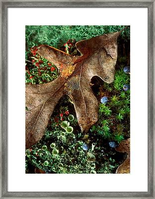 Forest Floor Detail Framed Print by Lloyd Grotjan
