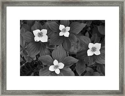 Framed Print featuring the photograph Forest Floor by Patrick Downey