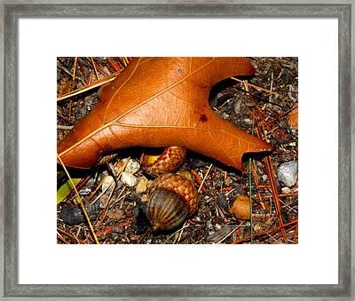 Forest Floor Framed Print by Robert Morin