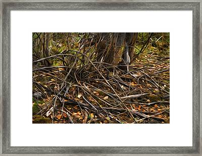 Forest Floor Framed Print by Theresa Tahara