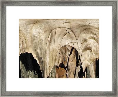 Forest Floor Framed Print by Tim Allen