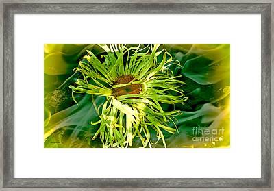 Forest Flower Framed Print by Jason Christopher