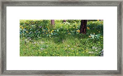 Forest Flowers Landscape Framed Print