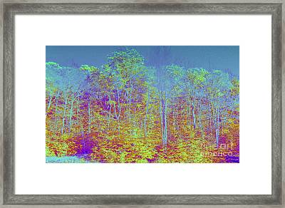 Forest Fog Framed Print