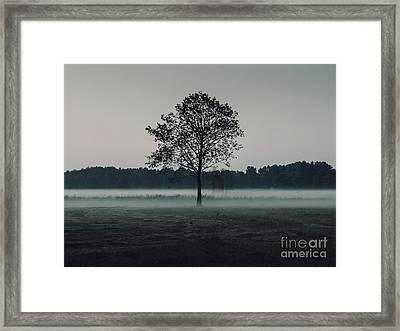 Forest Fog Framed Print by MGL Meiklejohn Graphics Licensing