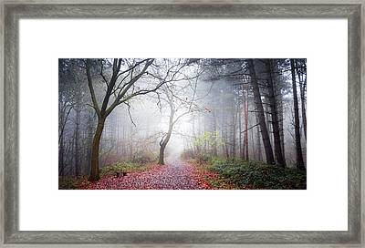 Forest Fog Framed Print by Svetlana Sewell