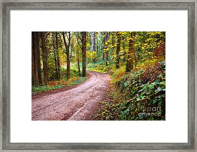 Forest Footpath Framed Print by Carlos Caetano