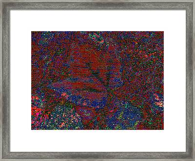 Forest For The Trees Framed Print by Tim Allen