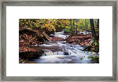 Framed Print featuring the photograph Forest Gem by Parker Cunningham