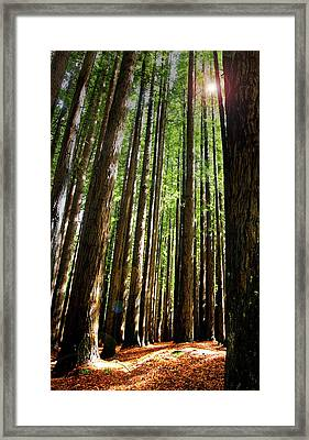 Forest Glade Framed Print