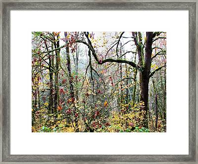 Forest Glory 1 Framed Print
