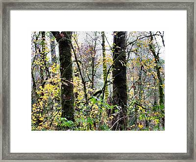 Forest Glory 2 Framed Print