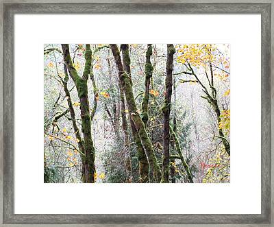 Forest Glory 3 Framed Print