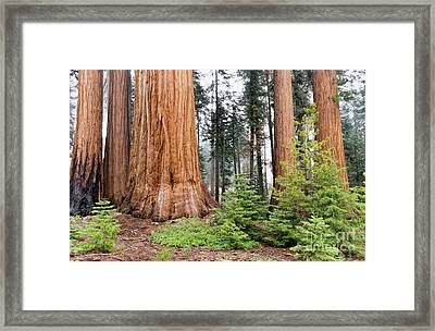 Framed Print featuring the photograph Forest Growth by Peggy Hughes