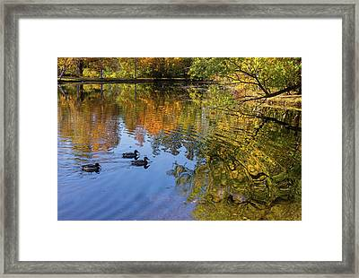 Forest Hill Reflections II Framed Print