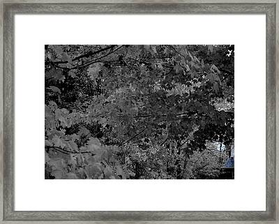 Forest Hut Framed Print