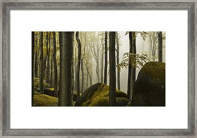 forest II Framed Print