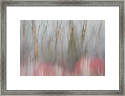 Forest Impression 1 Framed Print