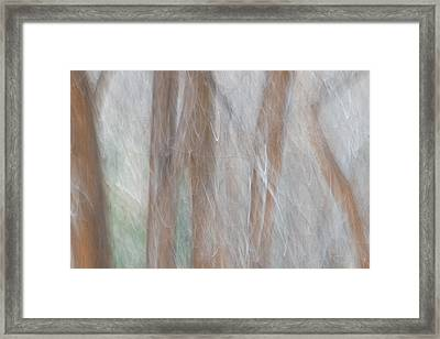 Forest Impression 4 Framed Print by Leland D Howard
