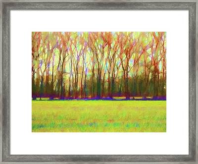 Forest In Autumn Light Framed Print