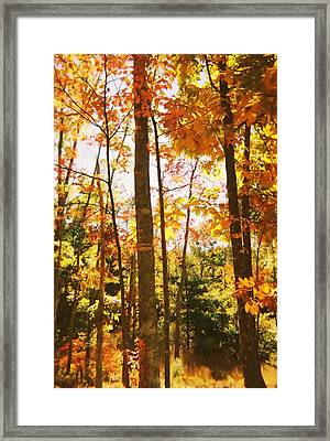Forest In Fall Framed Print
