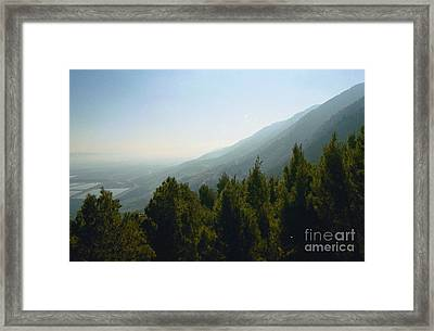 Forest In Israel Framed Print by Gail Kent