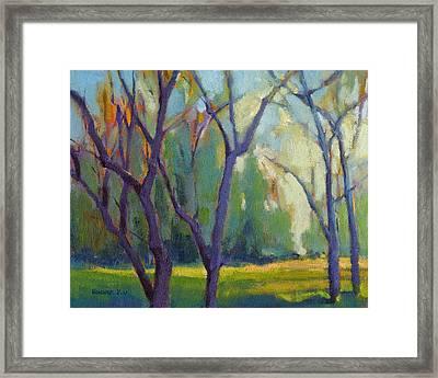 Forest In Spring Framed Print